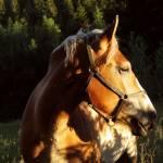 Orin Morissette Profile Picture